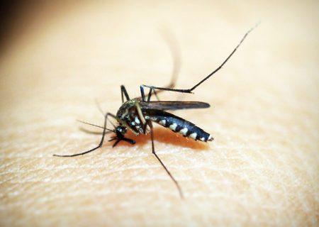 mosquito-1548947_1920