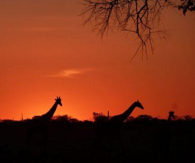 namibia_2_4_20121110_1234368291